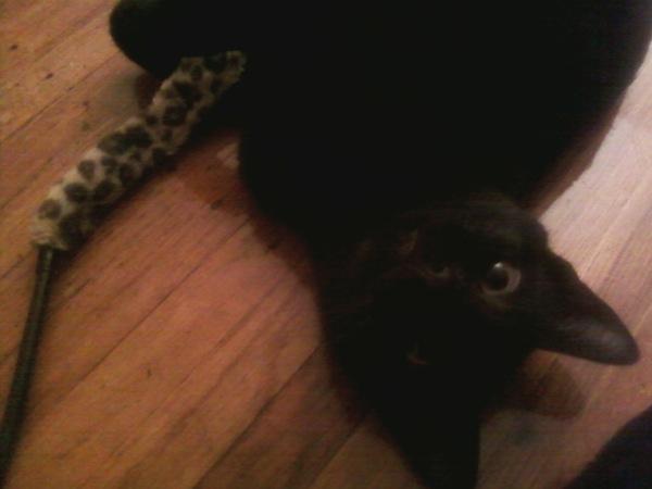 This blog is dedicated to Dinah, my favorite black cat.